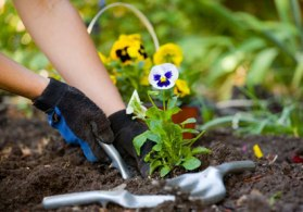 Simple Winter Gardening Tips